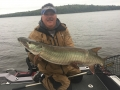 Steve with another cold front musky.