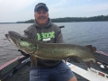 A twitched minnowbait triggered this nice musky for Steve during the 2017 University of Esox School on Lake of the Woods.
